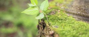 Naturheilpraxis Wurzel-Chraft